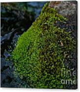 Mossy River Rock Canvas Print
