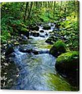Mossy Rocks And Water   Canvas Print