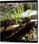 Mossy Waterfall On Mushroom Rock Canvas Print