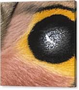 Moth Automeris Zozine Detail Of False Canvas Print