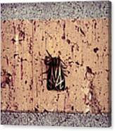Moth On Brick Canvas Print