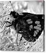 Moth One Canvas Print