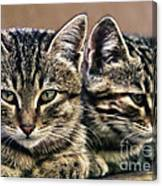 Mother And Child Wild Cats Canvas Print