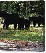 Mother Bear And Three Cubs Canvas Print