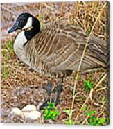 Mother Goose At Nest Canvas Print