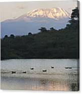 Mount Kilimanjaro Rises Above One Canvas Print