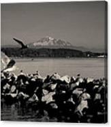 Mount Washington View From White Rock Bc Canvas Print