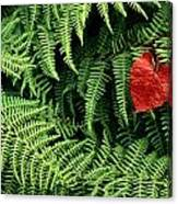 Mountain Bindweed And Fern Fronds Canvas Print