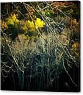 Mountain Branch Canvas Print