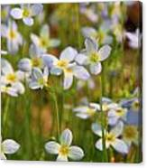 Mountain Flowers 5534 Canvas Print