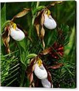 Mountain Lady's Slipper Orchid Canvas Print