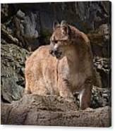 Mountain Lion On The Prowl Canvas Print
