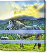Mountain Pony Canvas Print
