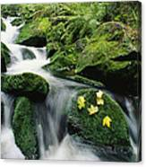 Mountain Stream Cascading Canvas Print