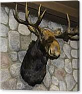 Mounted Moose Canvas Print