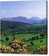 Mourne Mountains, Co Down, Ireland Canvas Print