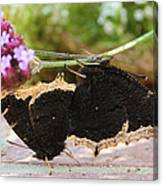Mourning Cloak Butterfly Lovin' Canvas Print