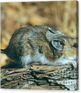 Mouse On A Log Canvas Print