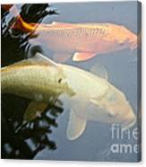 Mr And Mrs Koi Canvas Print