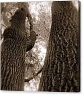 Mr And Mrs Oak Land Canvas Print