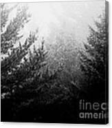 Mt Desert Fog Canvas Print