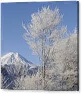 Mt Fuji And Frost-covered Trees Canvas Print