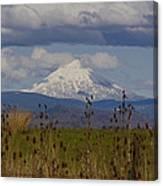Mt Mclaughlin Springtime Canvas Print