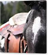 Mule Days Photo Canvas Print