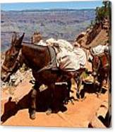 Mule Train Canvas Print