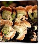 Multi Colored Gill Polypore Fungi 1555 Canvas Print