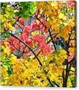 Multicolored Maple Canvas Print