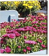 Mums At The Farm Stand Canvas Print