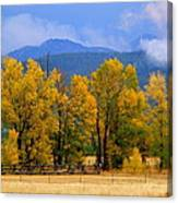 Murmur Of The Cottonwoods Canvas Print