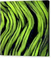 Muscle Fibres, Sem Canvas Print