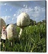 Mushroom Boy Canvas Print