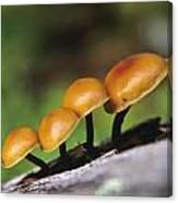 Mushrooms Growing On Log Canvas Print