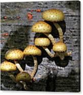 Mushrooms In Relief  Canvas Print