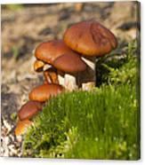 Mushrooms On Fallen Tree Canvas Print