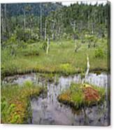 Muskeg Bog With Ponds, Mitkof Island Canvas Print