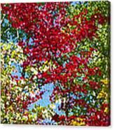 Muskoka Autumn Leaves  Canvas Print