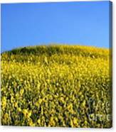 Mustard Grass Canvas Print