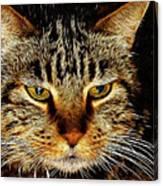 My Bored Cat Canvas Print