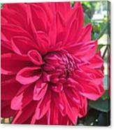 my favorite Dahlia Canvas Print