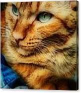 My Favorite Feline Canvas Print