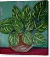 My house plant Canvas Print