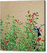 My Little Hummingbird Canvas Print