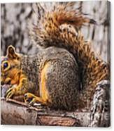 My Nut Canvas Print