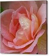 My Pink Rose Canvas Print