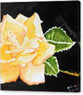 My Yellow Rose Canvas Print
