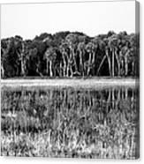 Myakka River Wilderness Canvas Print